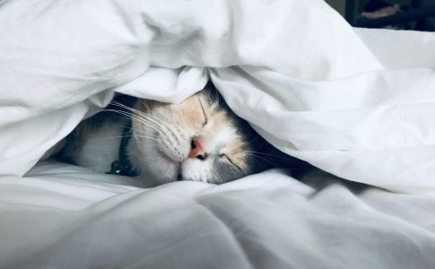 睡眠の誤解アイキャッチ