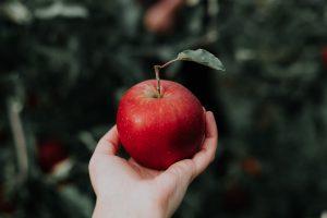 リンゴは包括的な存在