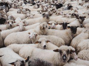 羊を数えても眠れない